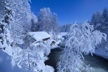 Frozen Trees Above Myllykoski Rapids And Old Mill, Juuma, Oulanka National Park, Kuusamo, Lapland, Finland