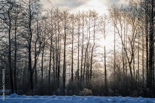 Staande foto Zwart tree trunk textured background pattern