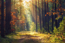 Autumn Forest Landscape. Colorful Foliage On Trees And Grass Shining On Sunbeams. Amazing Woodland. Scenery Fall. Beautiful Sunrays In Morning Forest