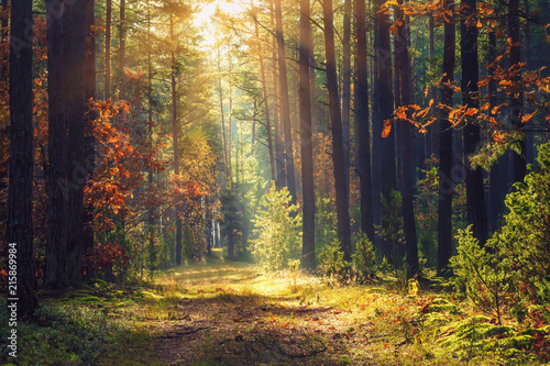 Poster Forest Autumn forest landscape. Colorful foliage on trees and grass shining on sunbeams. Amazing woodland. Scenery fall. Beautiful sunrays in morning forest