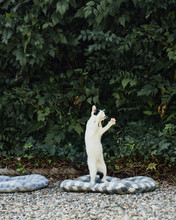 Adorable Kitty Jumps In Garden In Order To Grab A Leaf