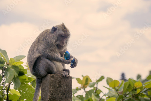 Close-up of monkey holding sunglasses while sitting on retaining wall against cloudy sky during sunset