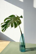 Huge Decorative Leaf