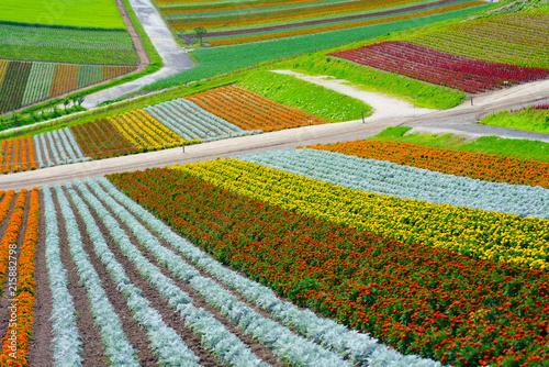 北海道の花畑 Canvas Print