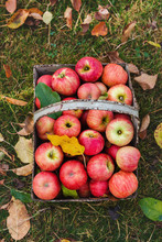 Organic Homegrown Apples With Spots