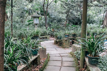 Path In A Chinese Style Garden