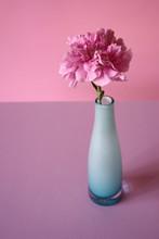 Pink Carnation In Blue Vase