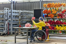Disabled Female Florist Arranging Gerbera Daisies At Greenhouse