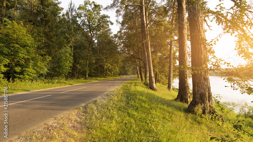 Keuken foto achterwand Begraafplaats The road in the pine forest, the rays of light through the trees