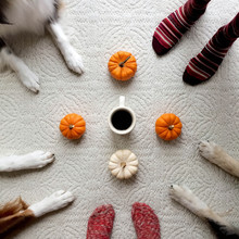 Paws, Pumpkins And Coffee!