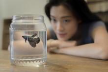 Singaporean Chinese Woman Watching Her Betta