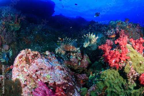Foto op Aluminium Onder water Beautiful Red Lionfish swimmong on a colorful tropical coral reef