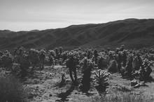 Desert In Black And White