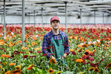 Confident Male Florist Standing Amidst Gerbera Daisies In Greenh