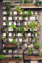 Vertical Garden In Brick Wall