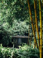 Chinese Style Garden