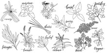 Set Of Popular Culinary Herbs ...