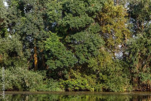 Bosque de ribera en el Río Órbigo, León, España. Sauces y alisos. © LFRabanedo