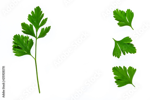 closeup of fresh garden parsley leaves isolated on white background