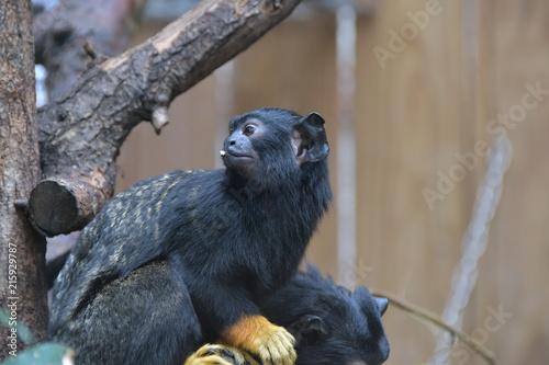 In de dag Panter Safari