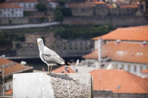 Fototapeta uliczki w Porto-wakacje obraz