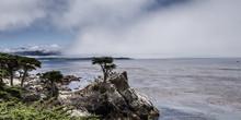 Lone Cypress Ist Eine  Monterey Cypresse Am Pebble Beach 17 Mile Drive In Californien