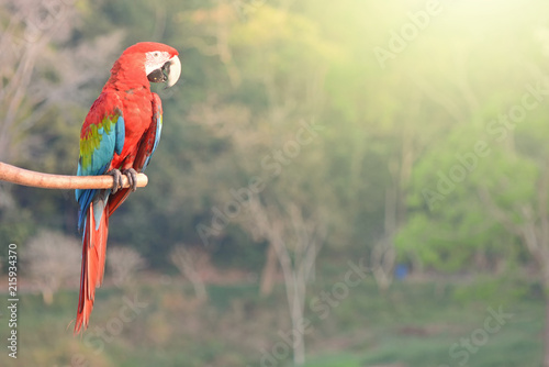 parrots on tree branch