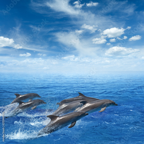 Staande foto Dolfijnen Dolphins jumping out of clear blue sea, blue sky with white clouds