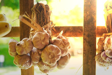 Garlic Cloves Hanging On Bamboo Walls And Sunlight Shining Down In The Thai Countryside Kitchen.