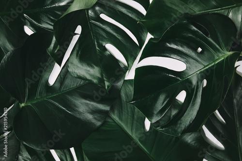pelna-klatke-strzal-zielonych-lisci-monstera-na-bialym-tle