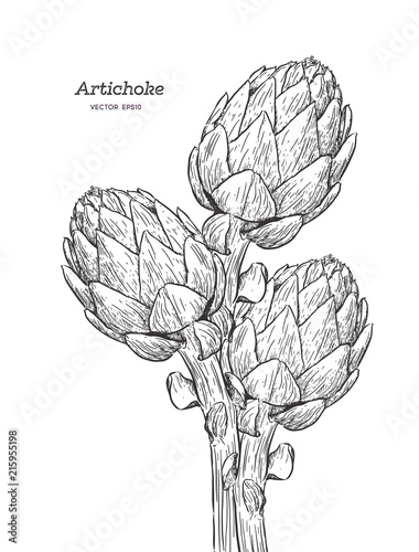 vector set of engraving illustration green vegetables artichoke on white backgro Canvas Print