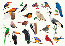 Various Cartoon Birds Collecti...