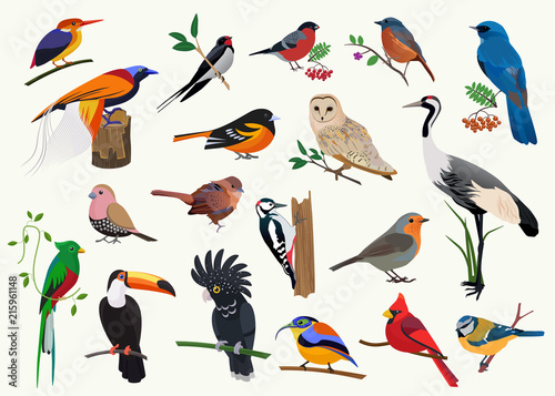 Staande foto Zoo Various cartoon birds collection for any visual design.