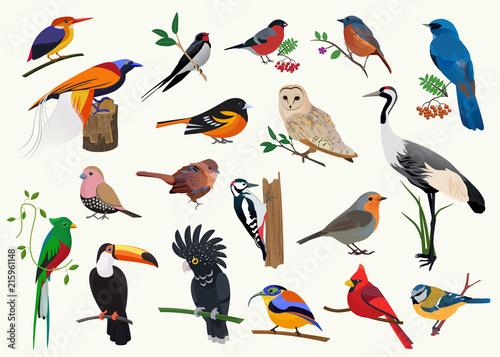 Fototapeta Various cartoon birds collection for any visual design. obraz