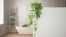 Green Interior Design Concept Background With Copy Space, Foreground White Wall With Potted Plant, Classic Bright Bathroom