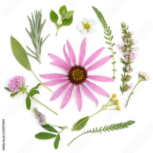 Stampa su Tela  Healing herbs