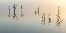 Dead Forest Reflection In The Morning Light At Lake Ninan Western Australia