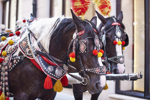 Poland, Krakow, two festive decorated horses