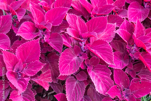 Stickers pour portes Rose Pink Leaves Background