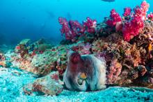 Background SCUBA Divers Swim P...