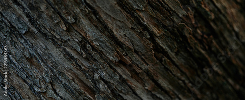 full frame image of tree bark background Canvas Print