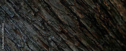 Photo full frame image of tree bark background
