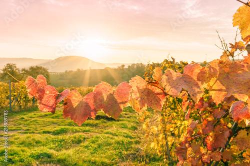 Deurstickers Toscane Sonnenaufgang im herbstlichen Weinberg