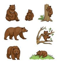 Brown Bears - Vector Illustrat...