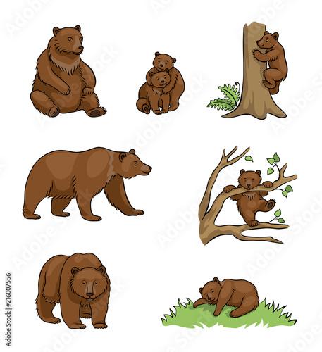 Fototapeta premium Niedźwiedzie brunatne - ilustracja wektorowa