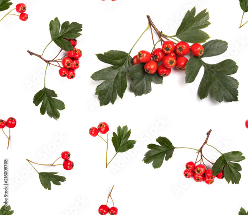autumn seamless pattern berry red whitethorn Wallpaper Mural