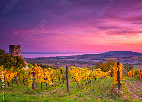 Foto op Canvas Snoeien Colorful sunset over vineyards at lake Balaton, Hungary