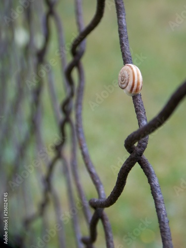 snail on a wire fence