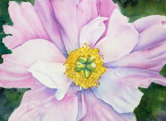 Obraz na Szkle Peonie pink peony flower