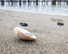 Clam Shell On The Beach With The Water Line And Pier Pilings Out Of Focus In The Background.